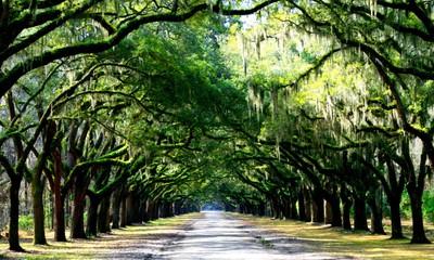 Wormslow plantation, Savannah GA