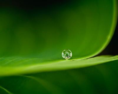 drop in green