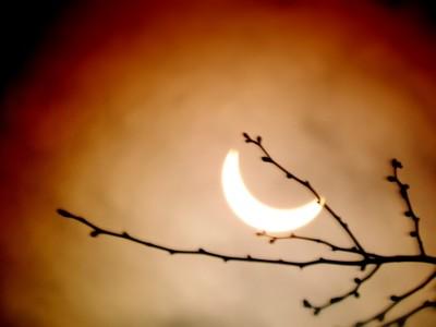 Solar Eclipse through the trees