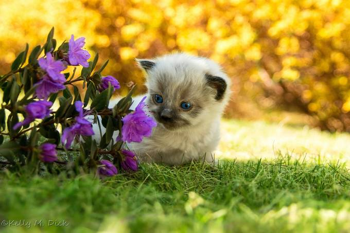 ~Time to Smell the Flowers~ by kellymdick - Cute Kittens Photo Contest