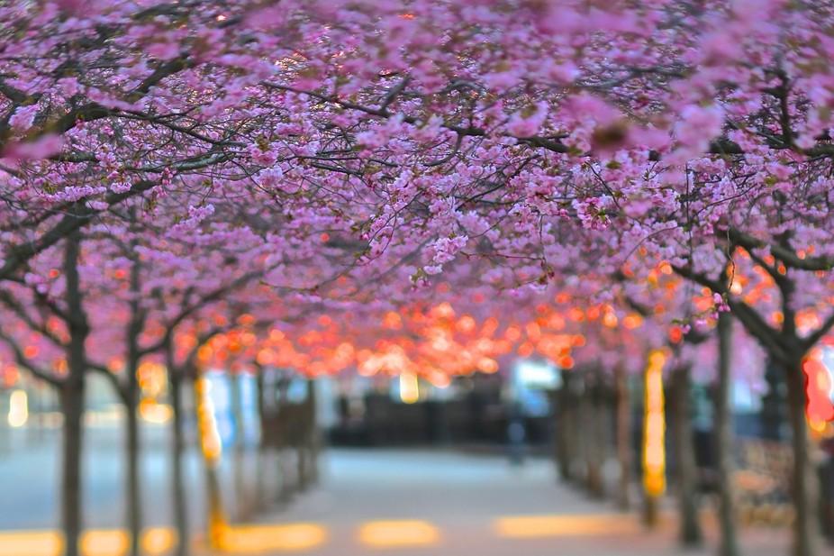 Stockholm spring IV