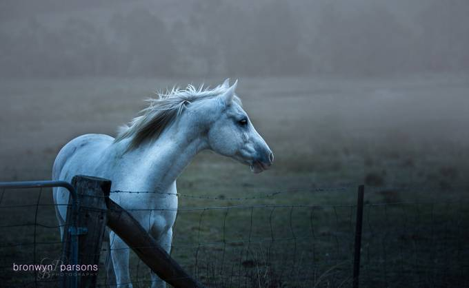 Through the mist by bronwynrebeccaparsons - Mist And Drizzle Photo Contest
