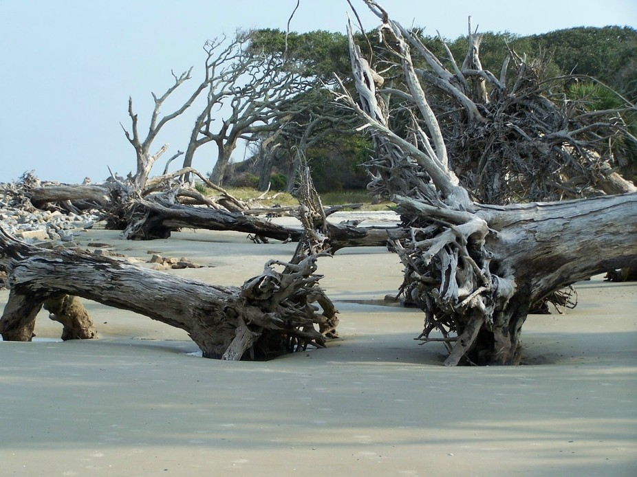 "Taken at Driftwood Beach, on Jekyll Island, GA, the ""driftwood"" on the beach is the anc..."