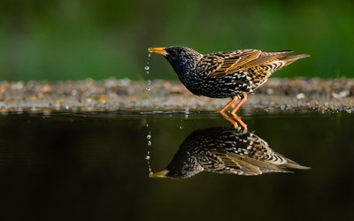 Photographer Of The Month Photo Contest Winners Revealed