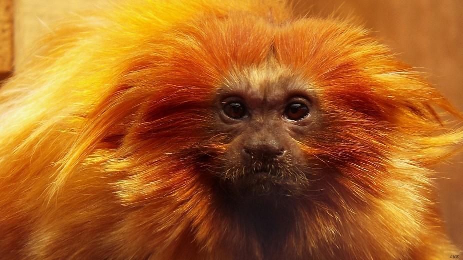 OrangeMonkey