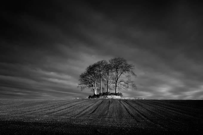 Tree Island by davidmould - Dry Fields Photo Contest