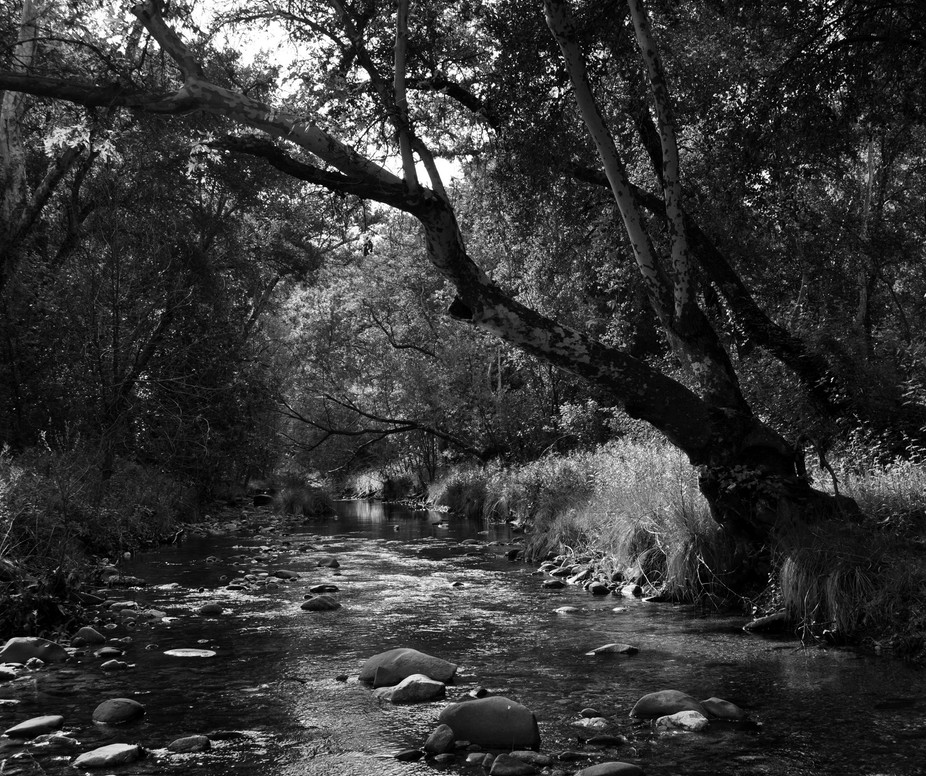 Creek bed off Nacimento-Fergusson Rd, Los Padres National Forest, Ca.  B&W change over.  ...