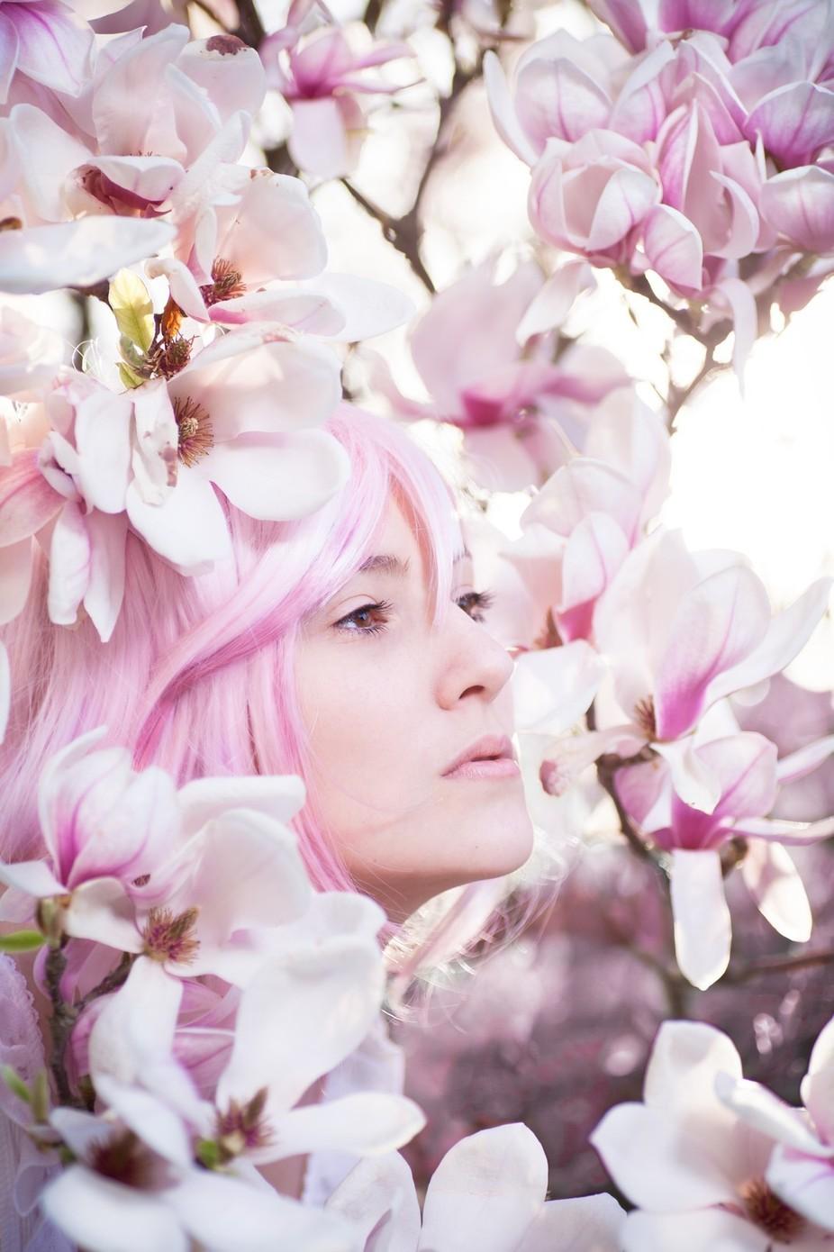 Noble Magnolia by corneliagillmann - Pink Photo Contest