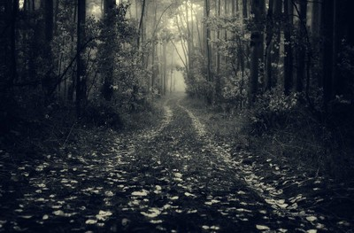 The road to neverland
