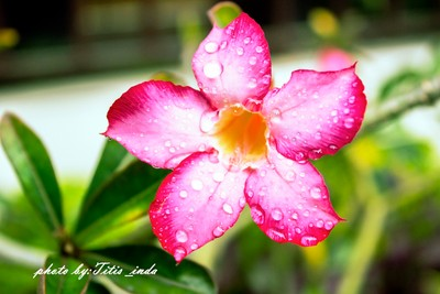hot flowers