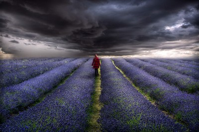 watching the storm in the lavender fields