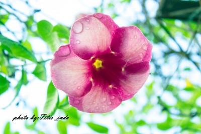 fresh nature flower