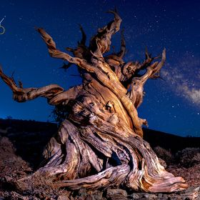 After hiking around in the White Mountains looking for a unique tree to shoot, we found this Ancient Bristlecone Pine tree. We came back at 2am t...