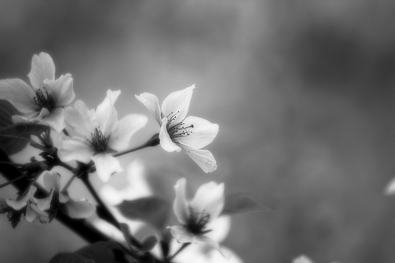 36 beautiful shots of black and white flowers enjoy the photo contest finalists
