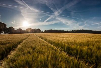 Shropshire Barley Field