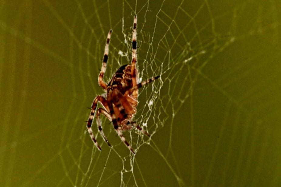 20140802-Spider_-2