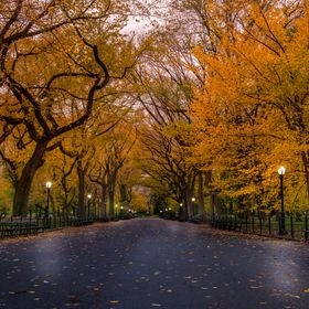 An early morning shoot in Central Park. No people, great leaves.