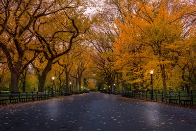 I recall Central Park in Fall