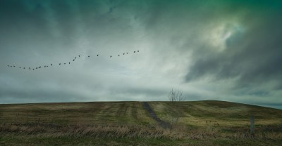 Geese in the Storm