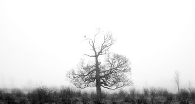 One Bird in a Tree