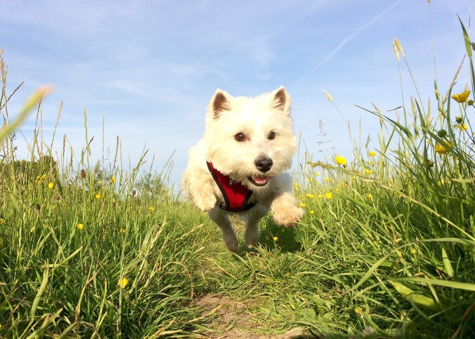Picture taken whilst my dog Poppy was running about and playing by the River in a grass meadow.  ...