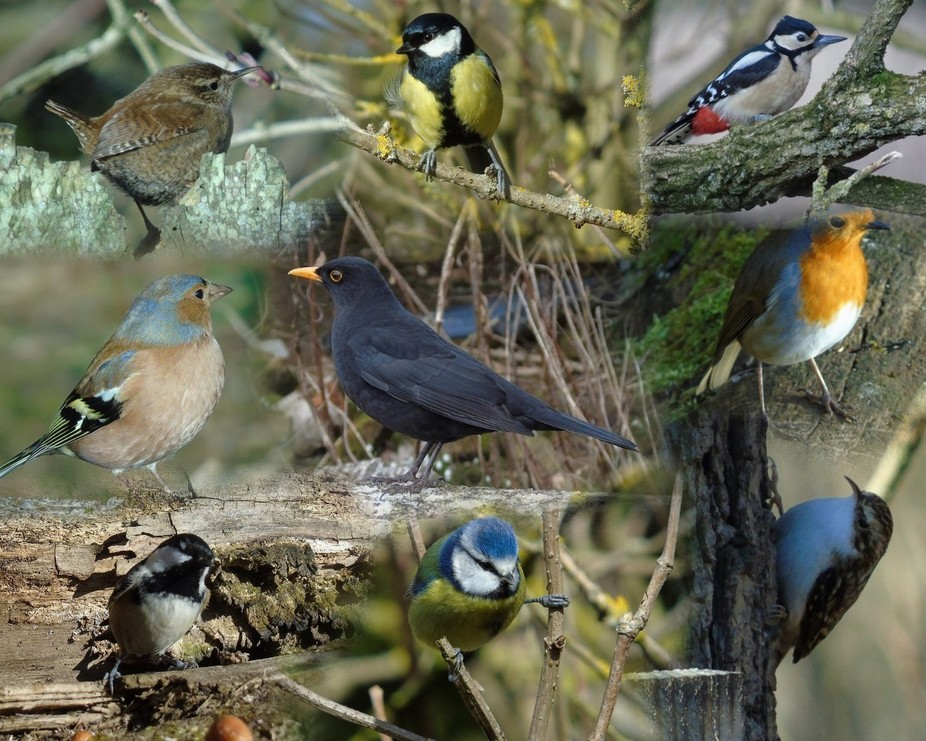 Collection of the birds in may garden