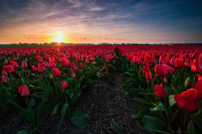 Perennial Red by martijnvdnat - Sun Flares Photo Contest