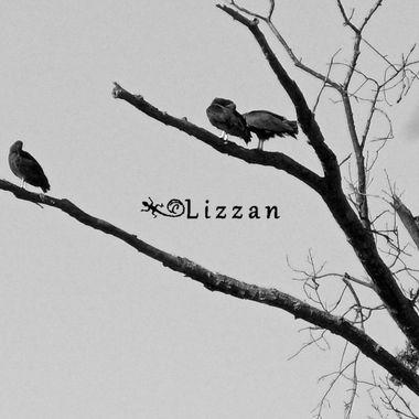 Vulture Family Respite