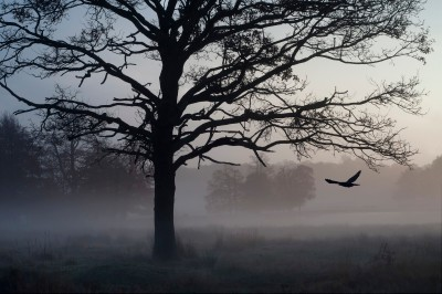 Spooky Morning