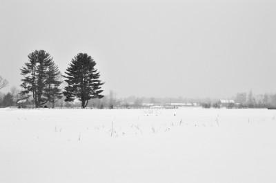 Merrick Farm Winter Fields