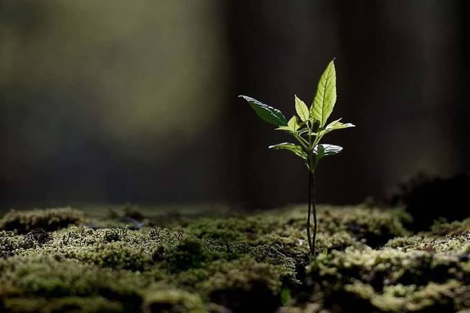 Seedling by Michael_Higgins - Below My Knees Photo Contest