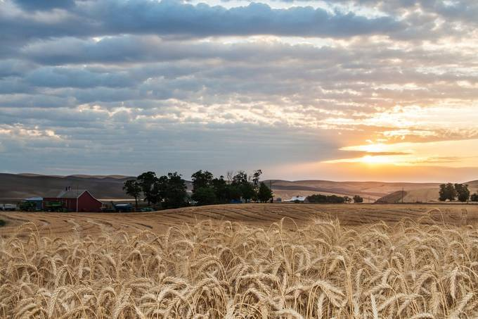 Walla Walla County Farm by tcarpenter71 - Farming Photo Contest