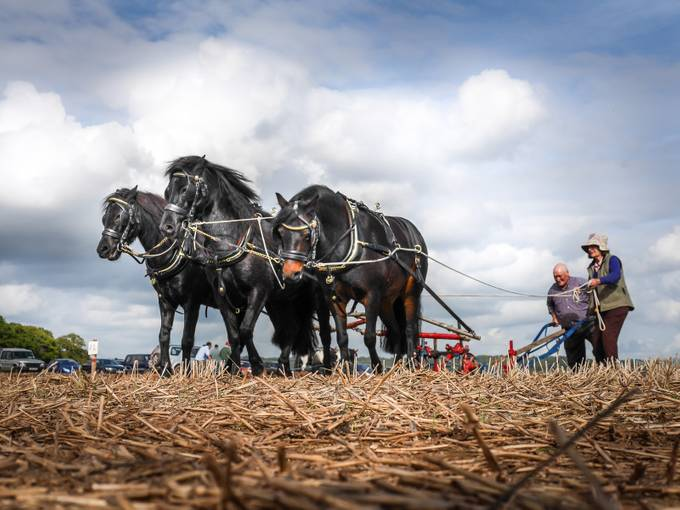 Ann and Will Williams Final plough (1 of 1) by emmadrabble - Farming Photo Contest