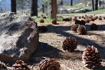 Pine Cones, Stone Wall Mine, CA