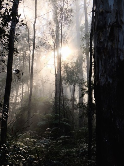 morning mist in forest