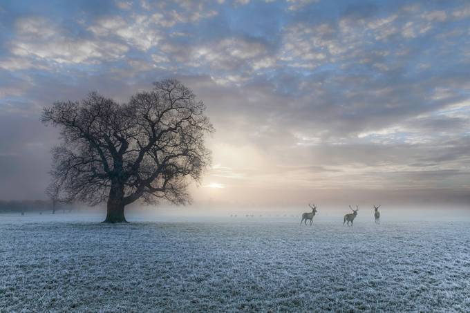 morning miracle by marekrajchert - Image of the Year Photo Contest by Snapfish
