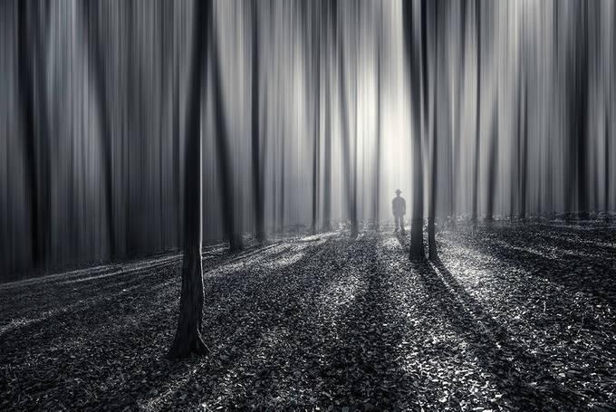 Meet Freddy Krueger... by marekrajchert - Black And White Wow Factor Photo Contest
