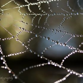 Beyond the Web...