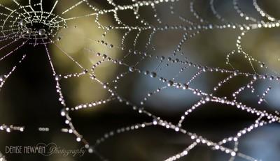 Beyond the Web...