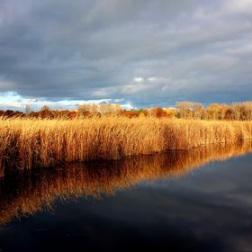 You can always find beauty in the Marsh especially when summer is coming to an end and Fall has taken hold. This photo is shown as taken with min...