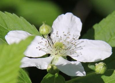 Mingo - Blossom