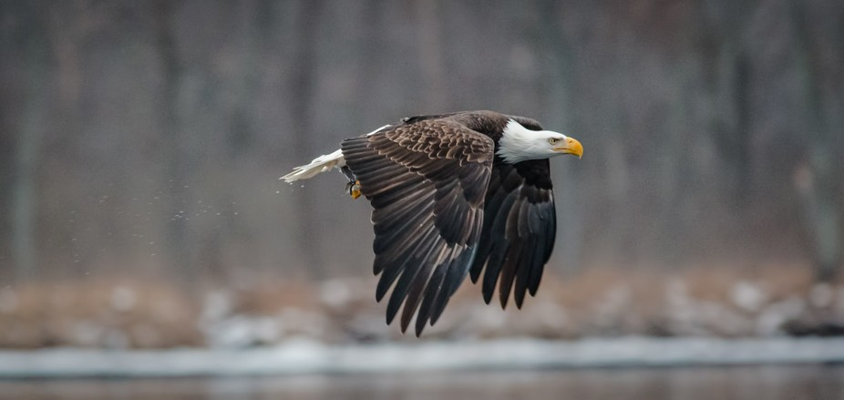 In Wisconsin in January and February is a magical time at the Dams were the eagles fish