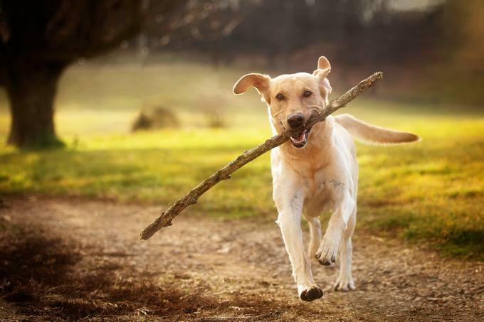 Fetch by TroyWheatley - Happy Moments Photo Contest