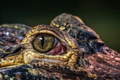 Bharat Mistry-Reptilia15-116
