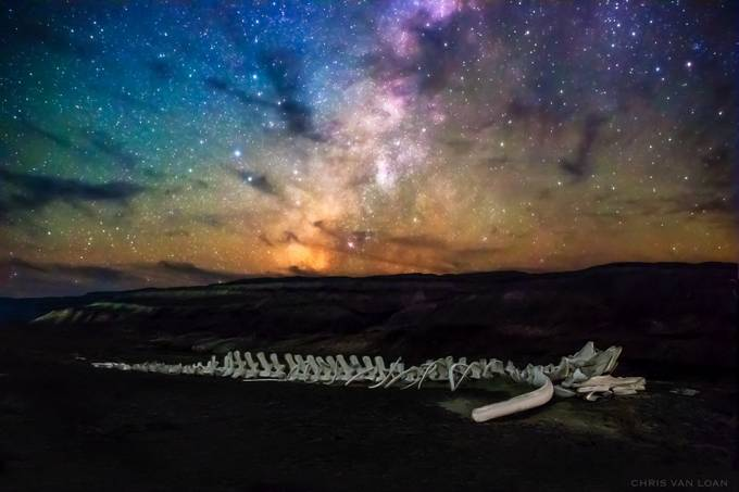 Whale Skeleton and the Universe  by ChrisVanLoan - Dark And Bright Photo Contest