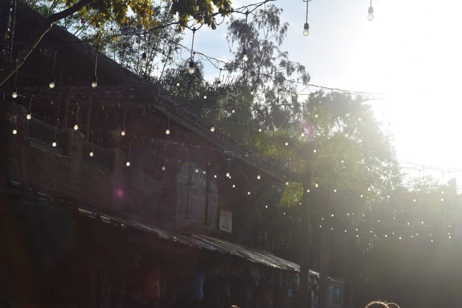 Daytime Fireflies