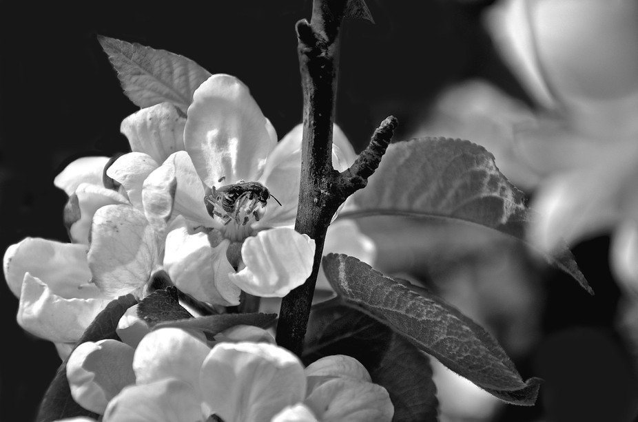 took this blossom pic in my garden the other day :)