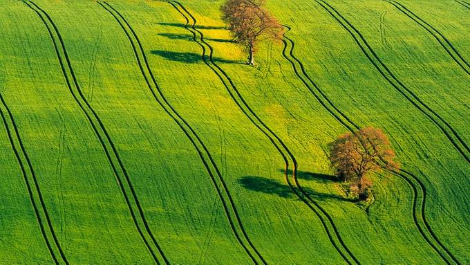 Shadows In Nature Photo Contest Winners