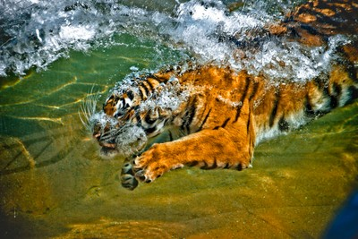 Hunting under water