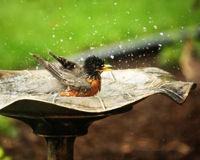Splish-Splash ~